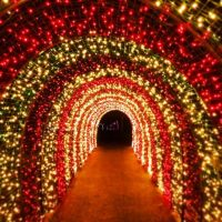 Candy Cane Tunnel